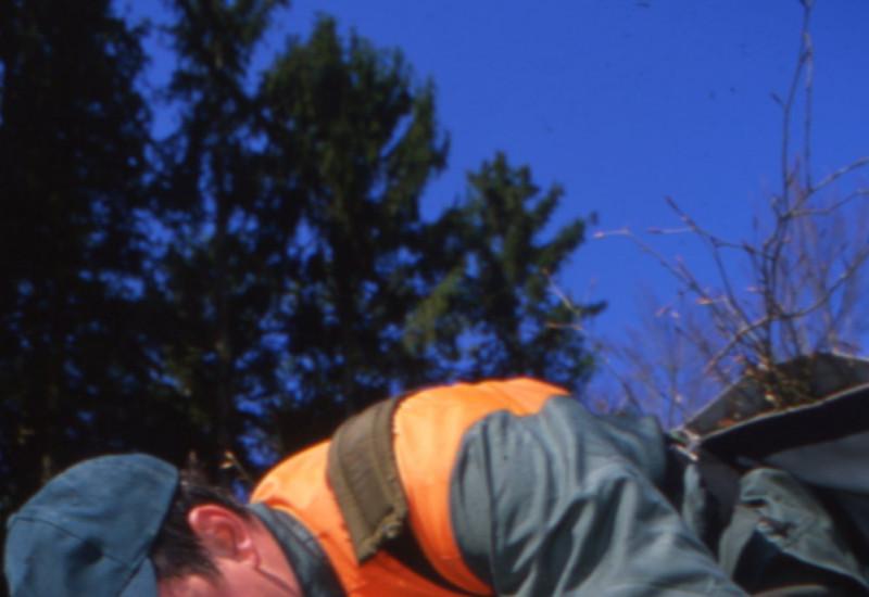 Mann bei der Baumpflanzung auf Lichtung vor Nadelwald.