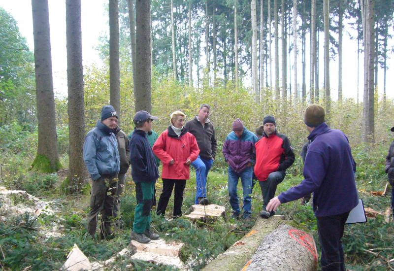 Gruppe von Personen im Wald vor älterem Nadelbestand mit Laubbaumunterpflanzung.