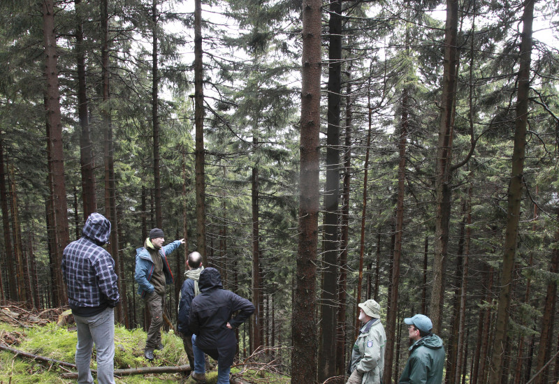 Sechs Männer in Nadelwald in Hanglage.