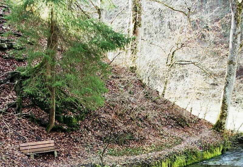 Landschaft mit kleinem Gewässer im Wald.