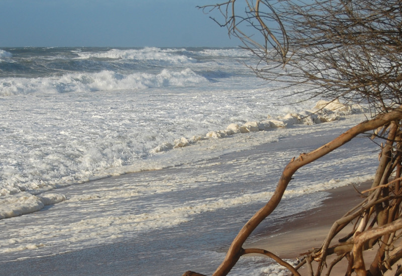Baumwurzeln an einer erodierten Sandsteilhangfläche.