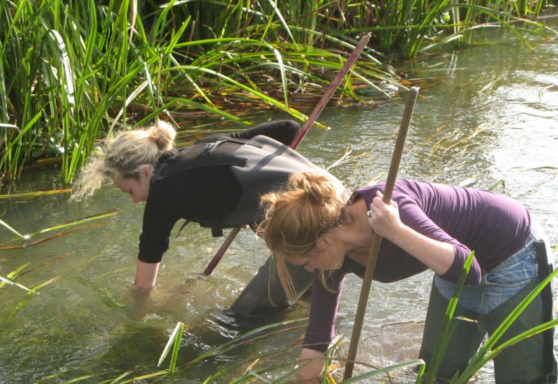 Zwei Frauen fischen im Flusswasser, um Proben des Benthos zu nehmen