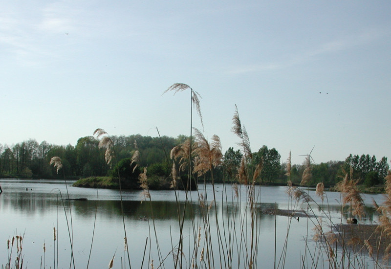 Blick durch hohe Gräser auf einem See im Abendlicht
