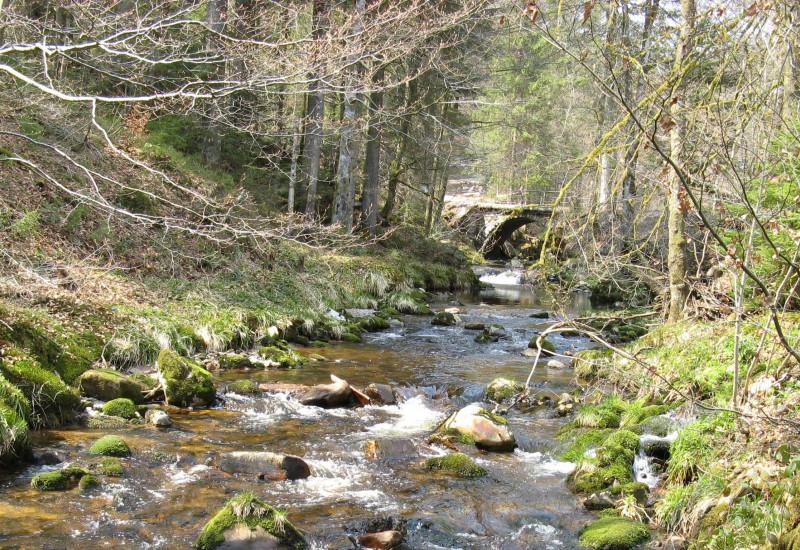 Bach der um moosbedeckte Steine fließt.