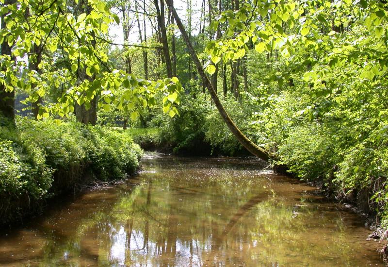 Brauner Fluss mit dichtem, grünem Uferbewuchs