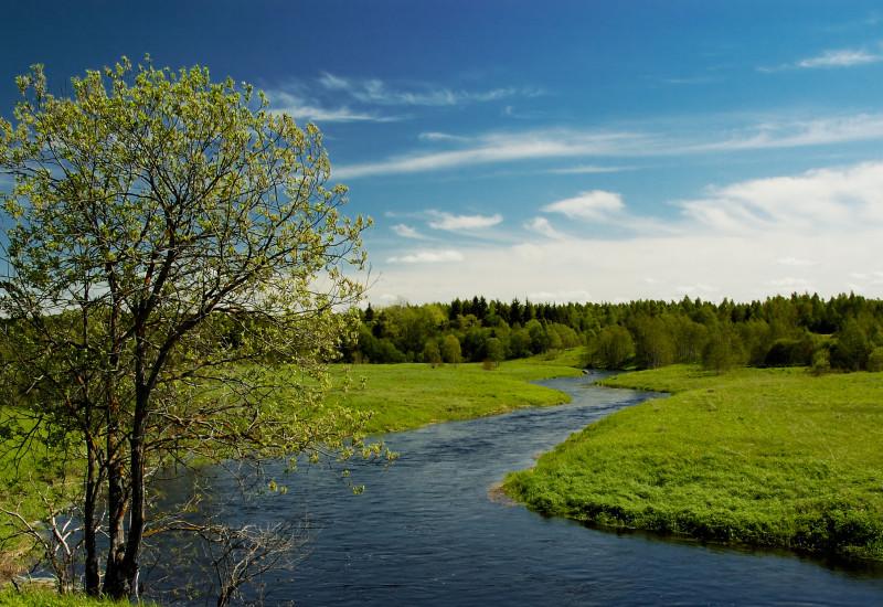 Ein Fluss und eine grüne Wiese mit Baum.