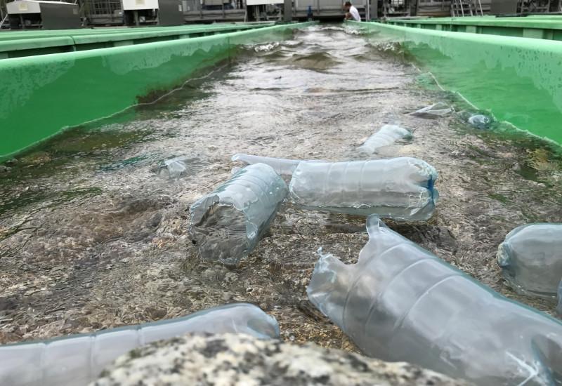 Plastikflaschen schwimmen in der Versuchsanlage.