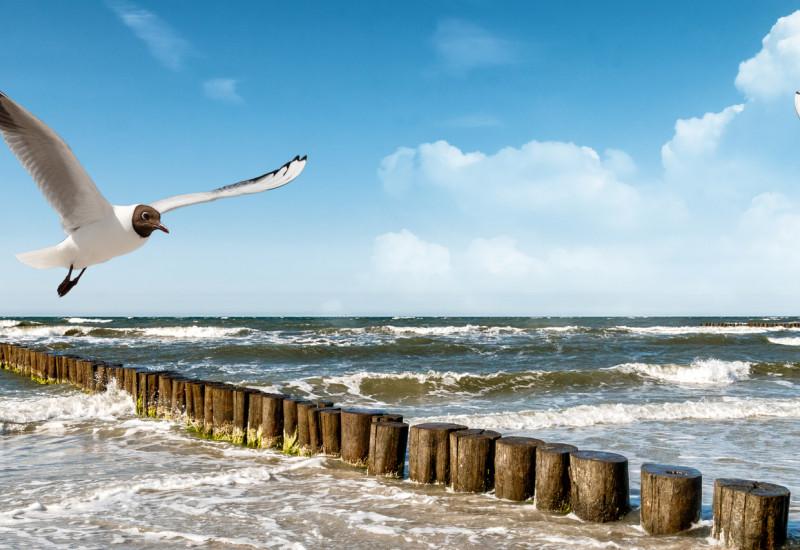 Eine Möwe fliegt über einem Strand in der Sonne.