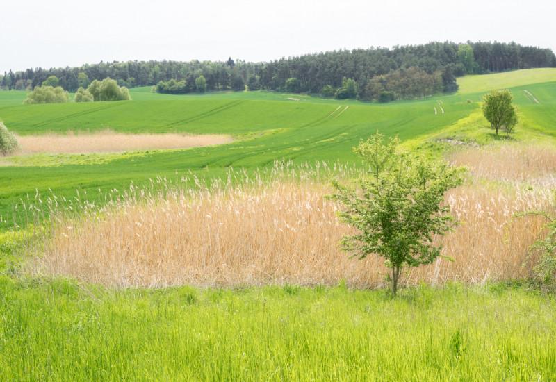 Ein Feld mit Wiese