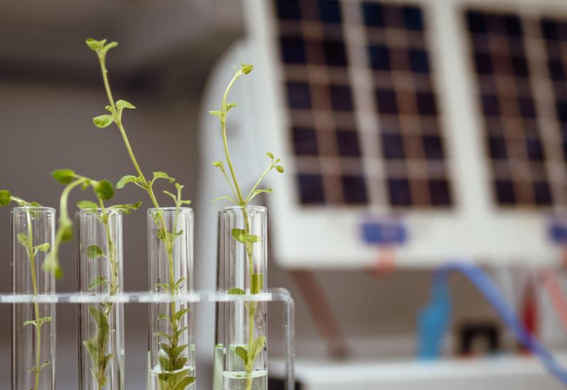 Pflanzen in einem Reagenzglas