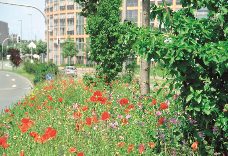 Stadthaus Münster mit Wildblumen im Vordergrund