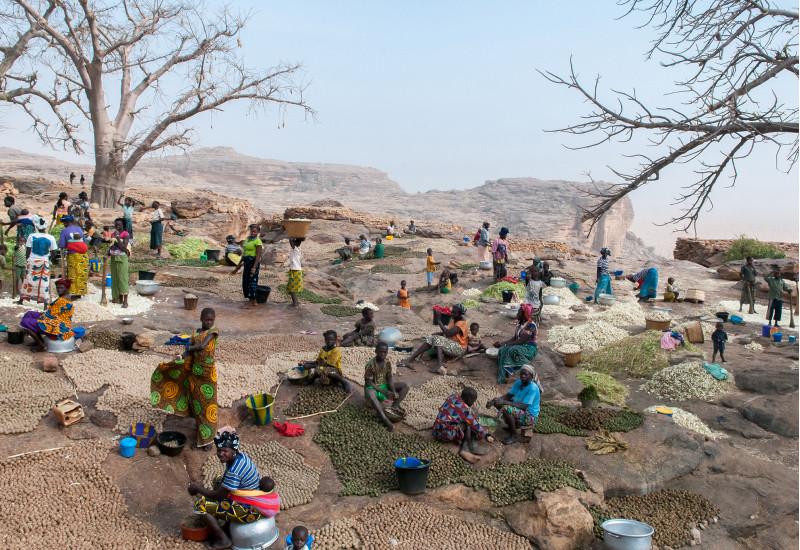 Ländliche Gemeinschafte breitet ihre Kartoffelsorten auf einem steinigen Berghang aus.