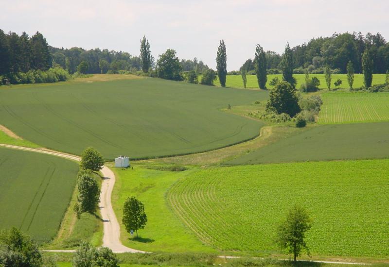 Grüne Wiesenlandschaft mit ein paar Pfaden