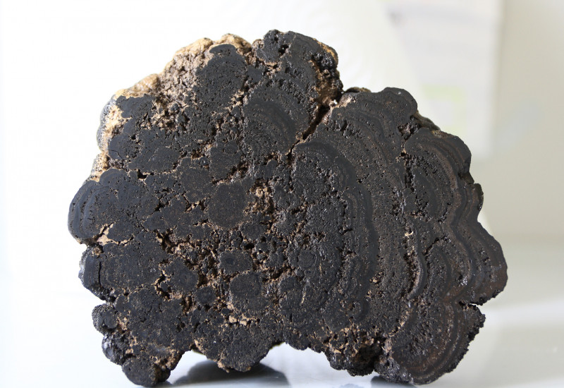 Querschnitt durch eine schwarze Manganknolle