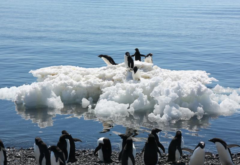 Eine Gruppe Adeliepinguine steht am Wasser. Fünf weitere stehen auf einer nahen Eisscholle.