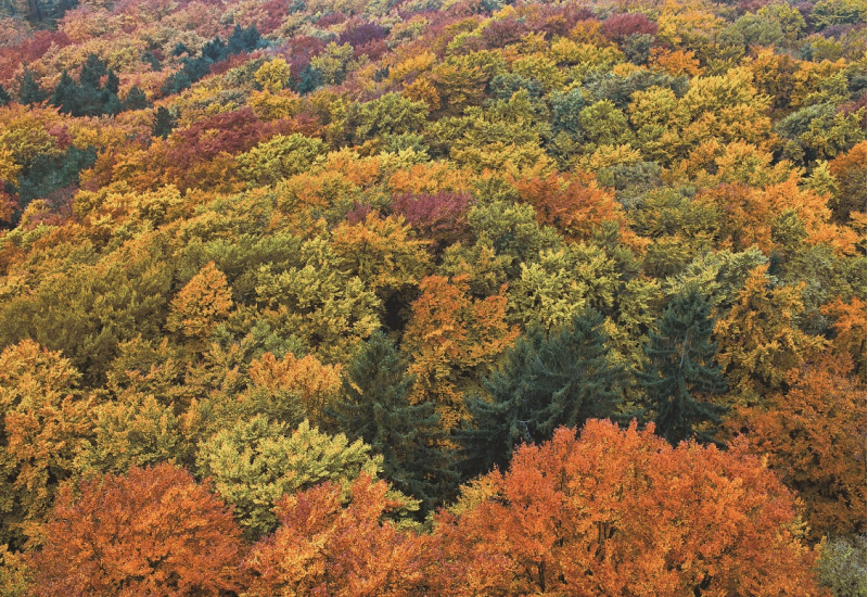 Das Bild zeigt das bunte Kronendach eines Waldes, der sich aus verschiedenen Laub- und Nadelbaumarten zusammensetzt.