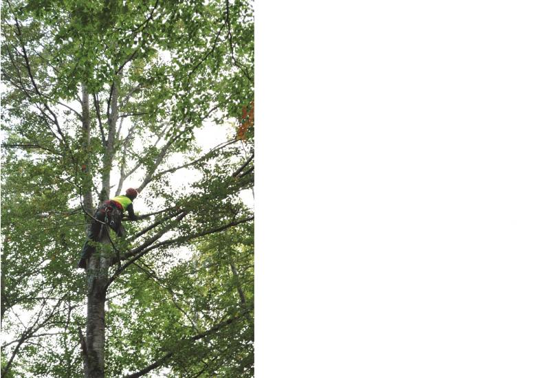 Das Bild zeigt einen Baumsteiger, der hoch oben in der Krone eines Laubbaums tätig ist.