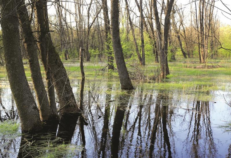 Das Bild zeigt einen überfluteten Laubwald.