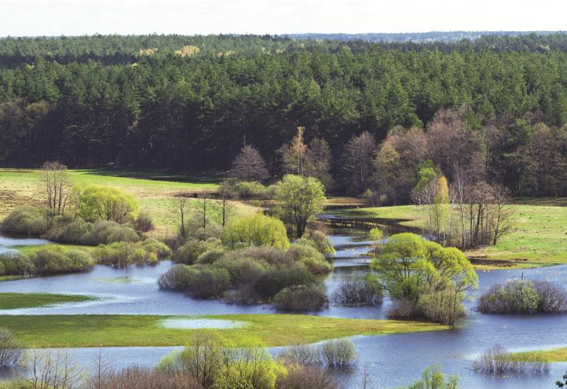 Das Bild zeigt einen Bach, der weit in die ihn umgebende Wiesenlandschaft ausgeufert ist. Einzelne Busch- und Baumgruppen stehen im Wasser. Im Hintergrund sieht man einen Nadelwald.