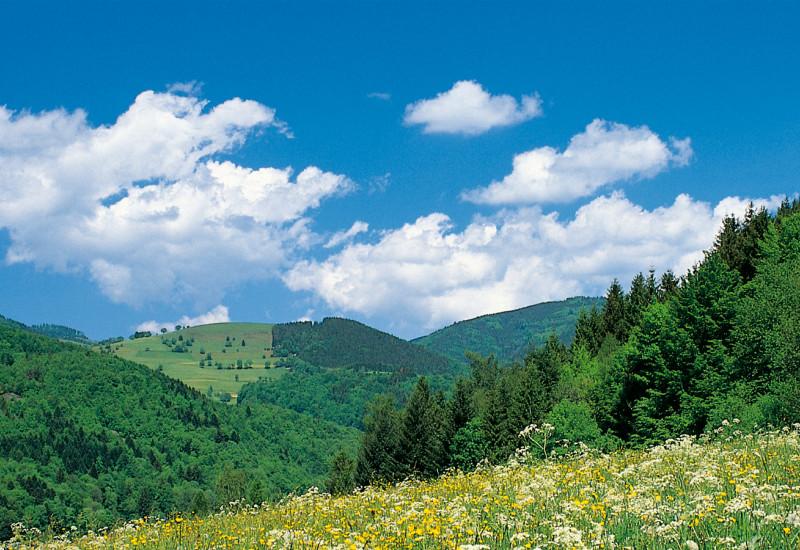 Hügelige Landschaft mit Wiesen und Wäldern