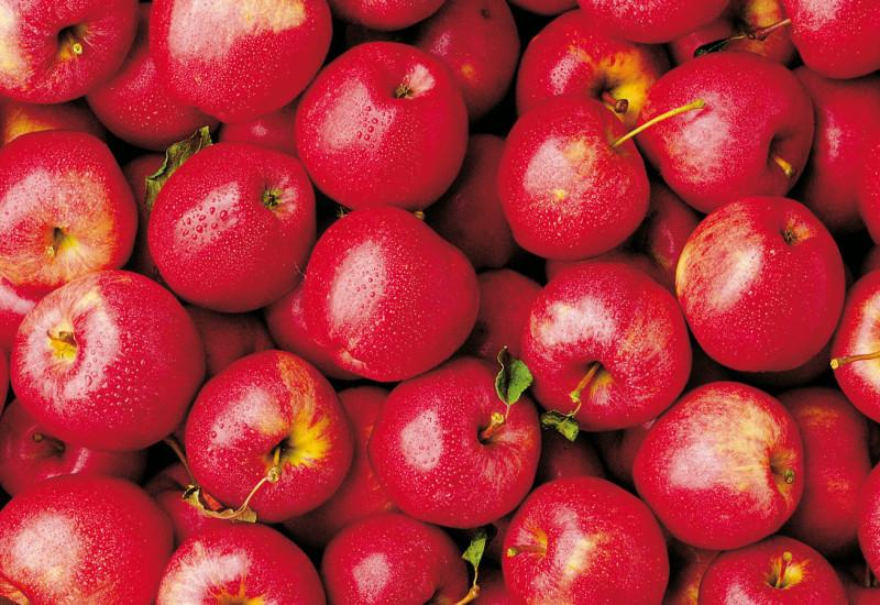 viele frische rot/pinke Äpfel