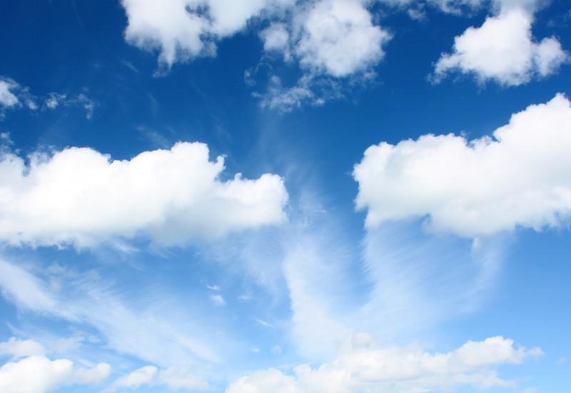 Auf einer grünen Wiese stehen Kühe. Der Himmel ist blau, nur ein paar weiße Wolken sind zu sehen.