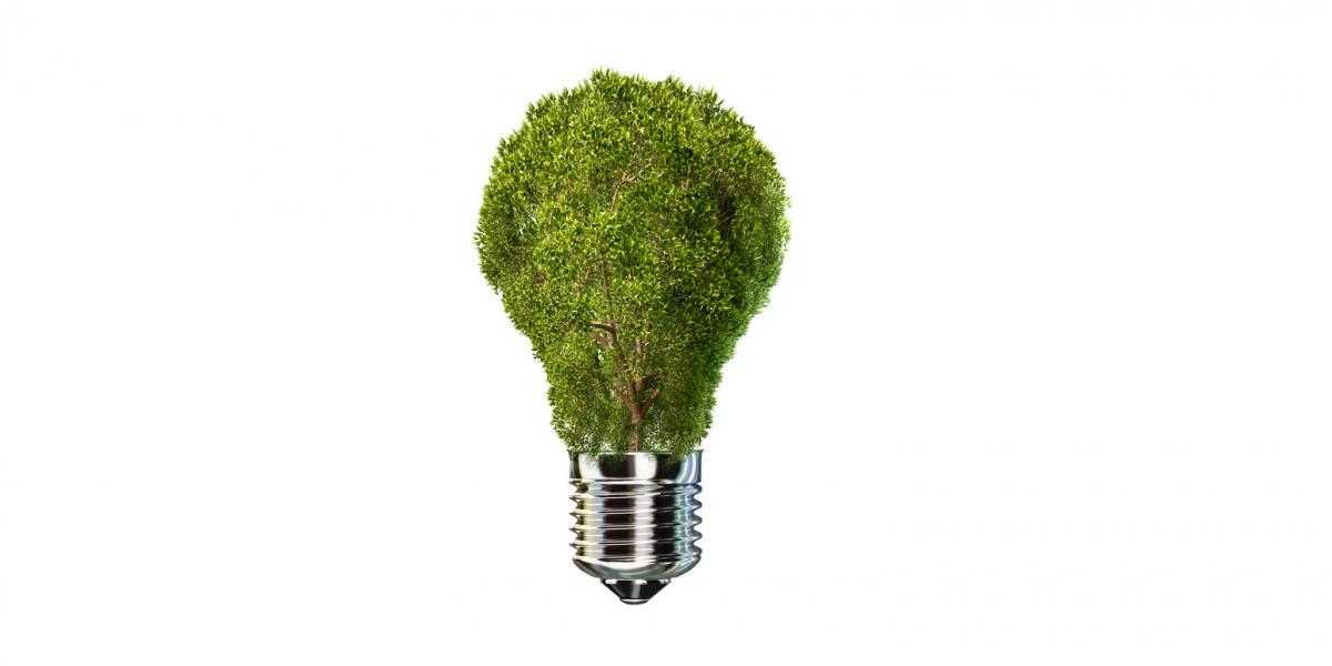 Symbolbild: Der obere Teil einer Glühbirne ist durch grüne Pflanzen ersetzt.