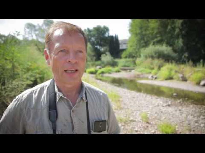 Naturnaher Hochwasserschutz an der Fulda