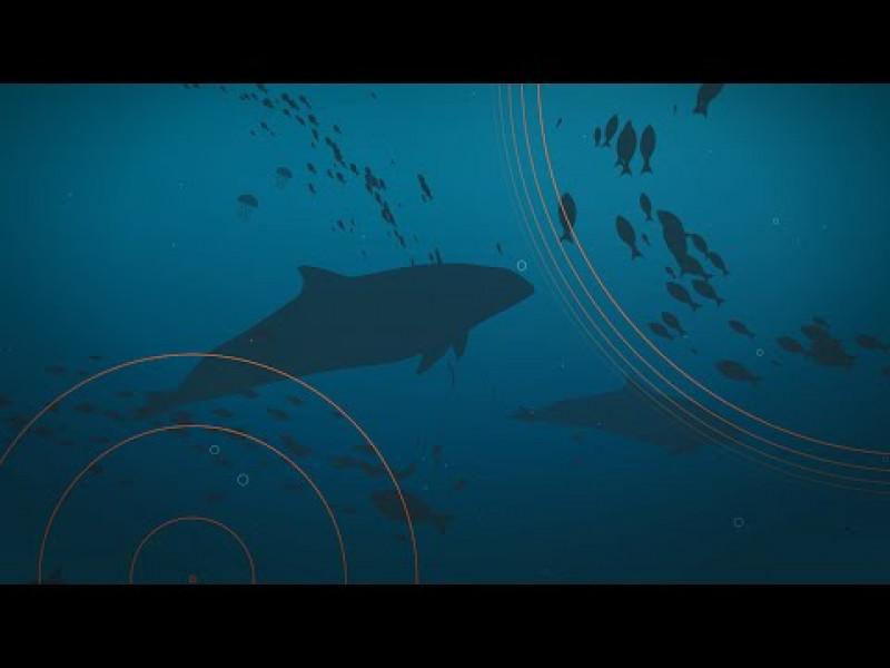 Erklärfilm: Unterwasserlärm